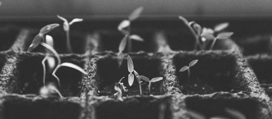 SEAD_Plants